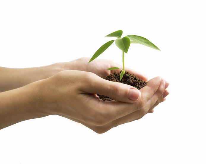 Nurturing a seed