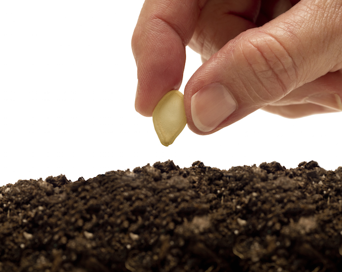 Hand planting a seed